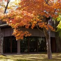 箱根美術館の紅葉。茶室「真和亭」ではもみじをみながらお茶がいただけます。