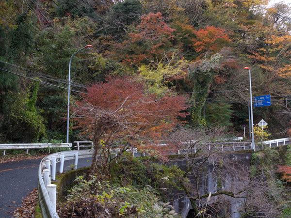 県道沿いに紅葉。