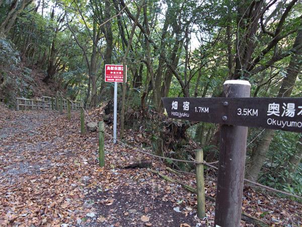 やっと舗装道路の県道から抜けてきれいな森の中の道に入ります。