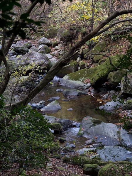 自然歩道の右側に須雲川が流れています。