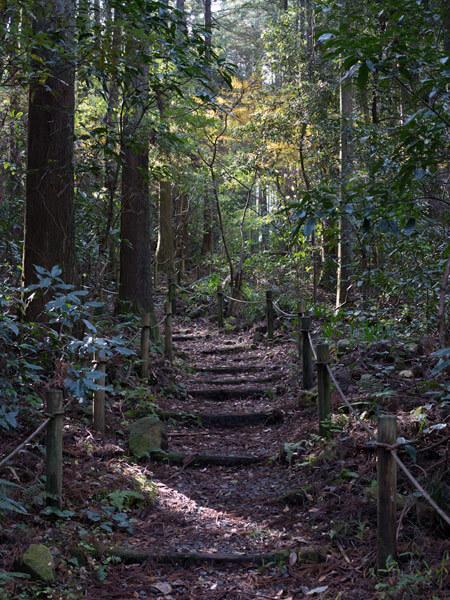 森の中を歩きます。