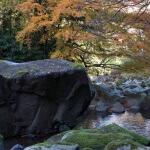 〈番外編〉晩秋の箱根旧街道