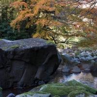 須雲川自然探勝歩道に入って約10分、川沿いに紅葉があります。きれいな川、巨石とあいまってよい景色です。