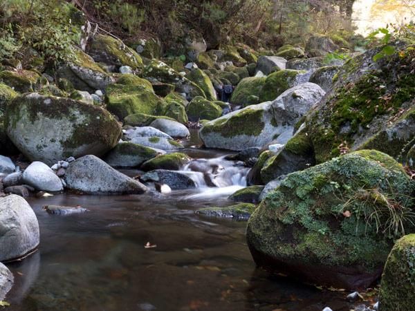 川も秋らしい雰囲気です。