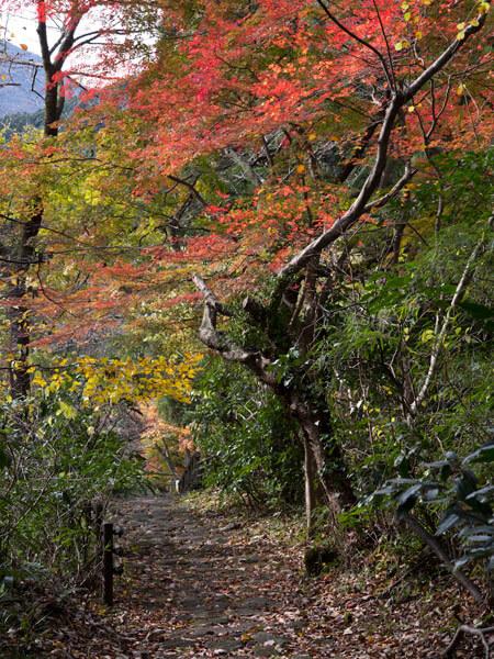 森の中の紅葉。