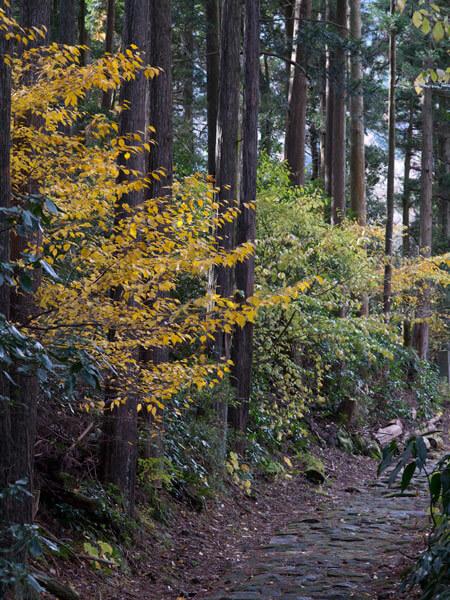 山中の石畳と秋の色。充実感いっぱいです。