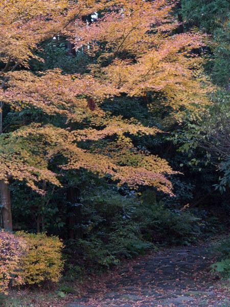 一里塚の背後、伸びていく石畳と紅葉。