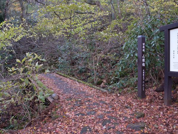 森の中は秋らしい景色です。