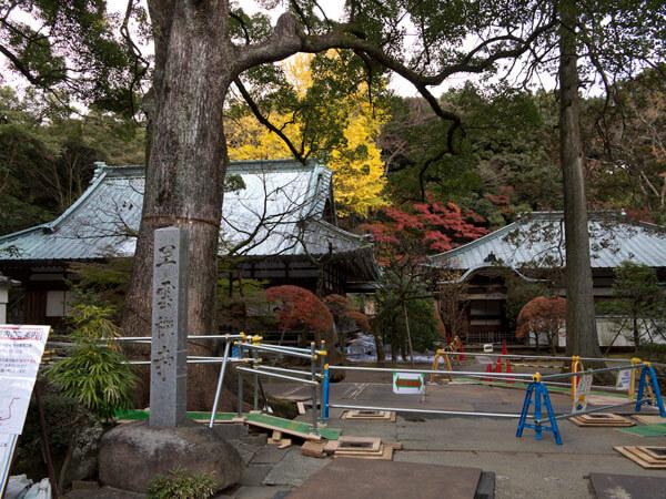 早雲寺に着きました。工事中は残念でしたが、本堂越しに紅葉がみえます。