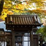 箱根、長安寺の紅葉。門を入ってもたっぷり紅葉が続きます。