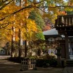 箱根、長安寺の紅葉。本堂脇から五百羅漢に向かいます。