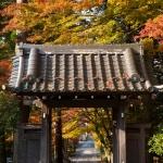 箱根、長安寺の紅葉。本堂から振り返っても紅葉。