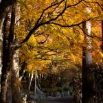 箱根、長安寺の紅葉。本堂脇から五百羅漢へといたる道。