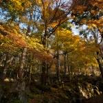 箱根、長安寺の五百羅漢と紅葉。見事なものです。