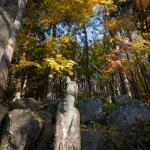 箱根、長安寺の五百羅漢と紅葉。