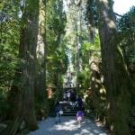 第四鳥居をくぐると立派な杉木立の美しい参道が続きます。