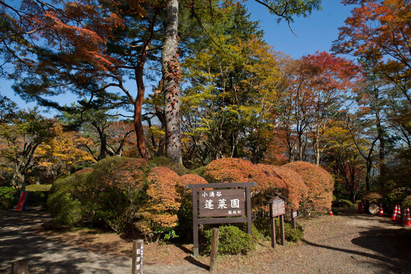 箱根、蓬莱園の紅葉。