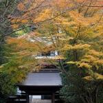 箱根、早雲寺惣門の紅葉。