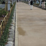 段葛。改修工事終了直後の写真。以前は土でしたがモルタルのような舗装となりました。