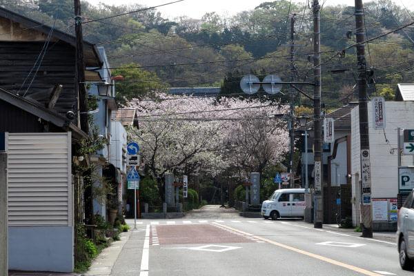 宝戒寺の桜。