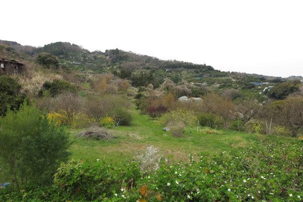 石橋山古戦場の石碑から少し上がったあたり。周囲は果樹園が広がります。この辺りで日本を変えた傑物 源頼朝が最初の合戦を行ない、敗れます。