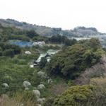 石橋山。中央にみえている建物は佐奈田霊社。長閑な景色に佇み、今日に繋がる源頼朝の活躍を想像します。