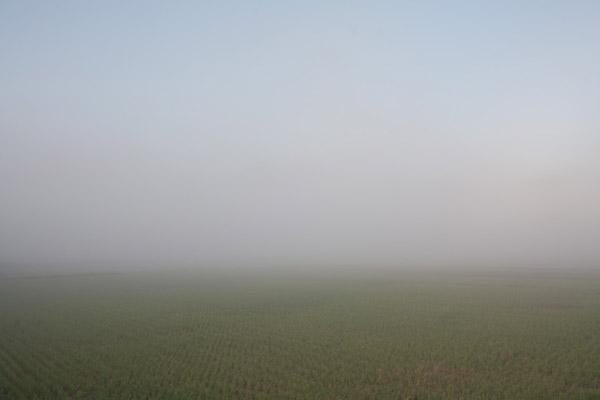 斗賀野付近では、さらに靄が濃くなりました。7時21分。