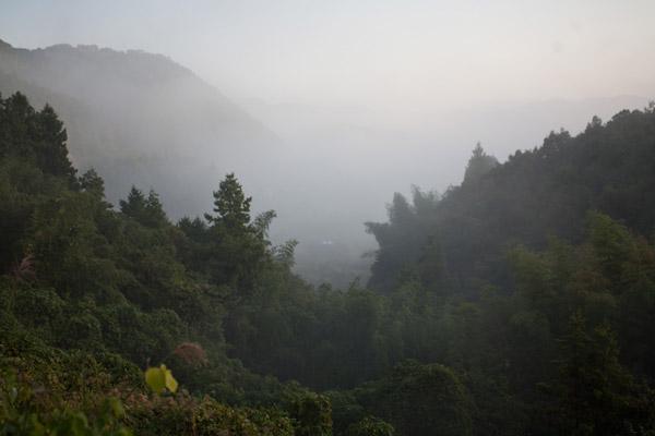 濃い朝靄です。
