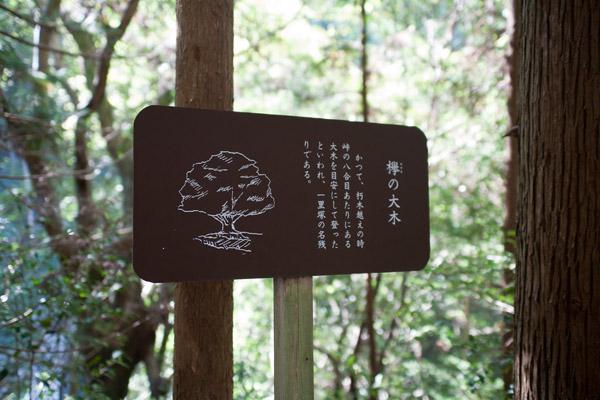 立札にはこうありました。「欅(けやき)の大木 かつて、朽木峠越えの時、峠の八合目あたりにある大木を目安にして登ったといわれ、一里塚の名残りである」。随所にあるこういう案内は、旅を充実させてくれます。