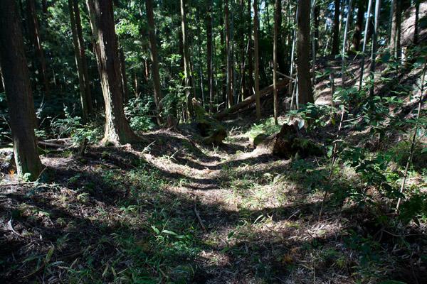 重い腰をあげて下り始めます。10時27分。植林の杉が多いです。