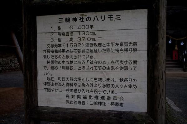三嶋神社にあるハリモミの説明板。
