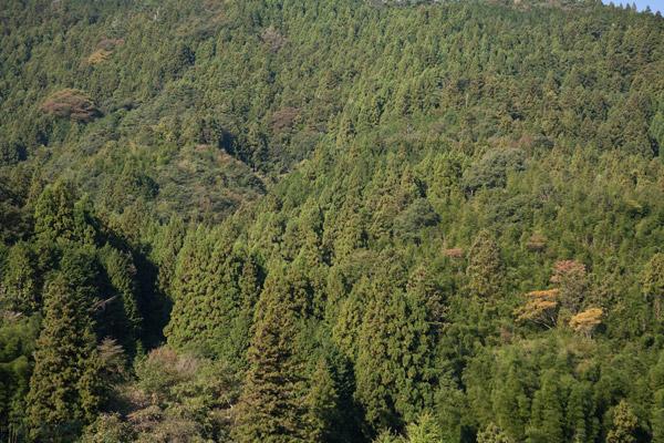林業が盛んなようです。