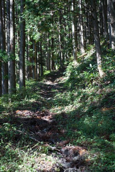 登りの山道では12kgの荷物はより負担となり、脚の痛みが増し遅々とした歩みに。