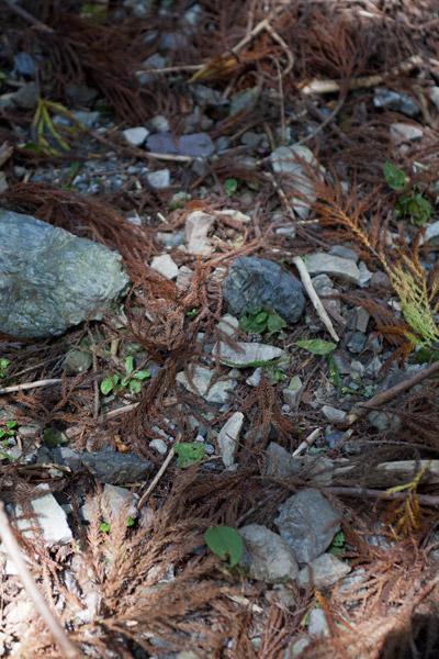 この辺りの道はこのように石などが混在しています。自然な雰囲気でよいのですが、トレッキングシューズがおすすめです。