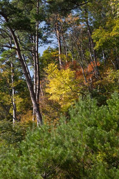 秋らしい景色。高所らしいヌケの良い空気。