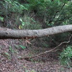 かなりの期間放置されているようで倒木もあります。