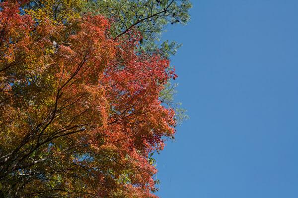伊予河辺の秋。空が綺麗です。