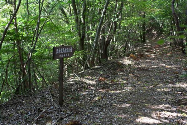 気持ちの良い林道ですが、脚の痛みがひどいです。1時28分。