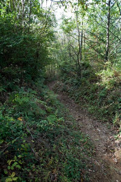 林道を進みます。