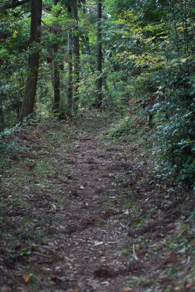 泉ヶ峠を目指します。