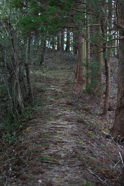 泉ヶ峠に向かいます。3時50分。