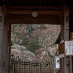 第32番 東慶寺(聖観音)