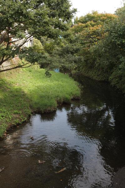大御堂橋からみる滑川。