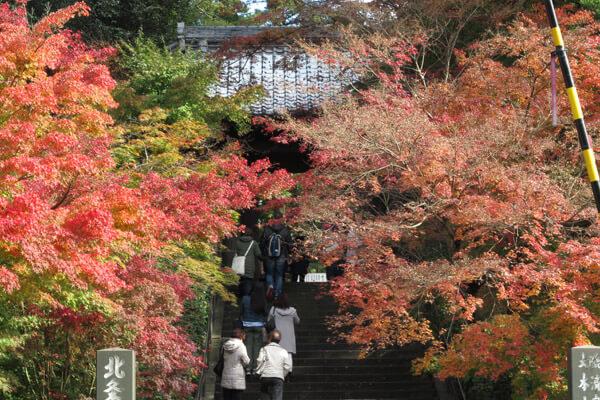 平成28年(2016年)11月25日、円覚寺の紅葉。
