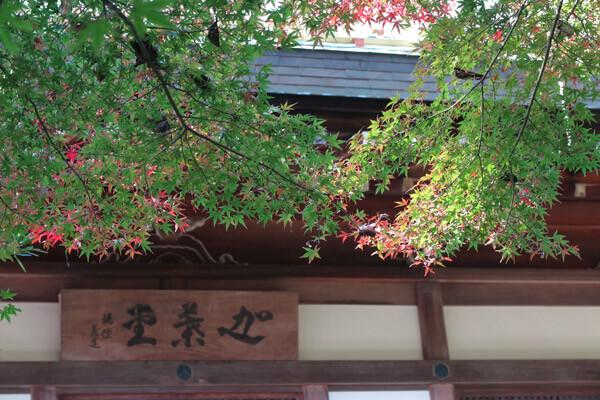 平成28年(2016年)11月25日、報国寺の紅葉。