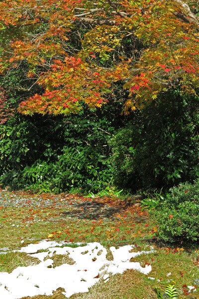 平成28年(2016年)11月25日、海蔵寺参道の紅葉。
