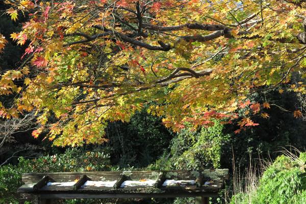 平成28年(2016年)11月25日、海蔵寺の紅葉。