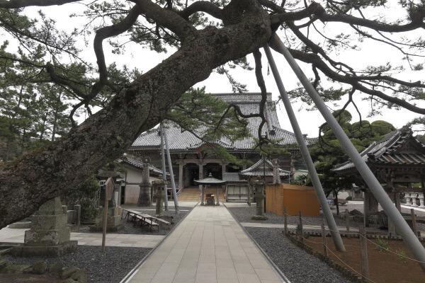誕生寺、境内。