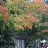 平成29年(2017年)10月25日(水)円覚寺の紅葉