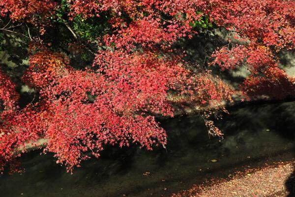 犬懸橋から秋の景色。